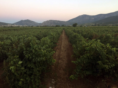 Aivalis Winery in Nemea, photo by Angelos Damoulianos