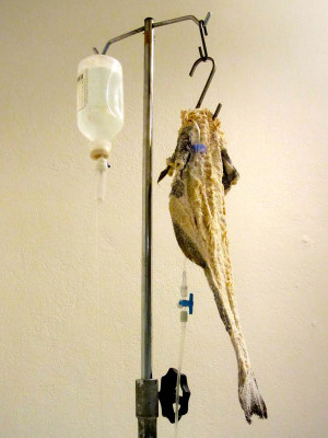 Salt cod hooked up like an IV drip, an exhibit at the Gastronomy Museum, photo by Diana Farr Louis
