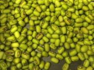 Mung beans, photo by Lillian Chou