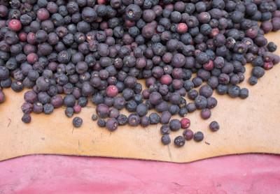 Phalsa berries are used to make sherbet, photo by Sarah Khan