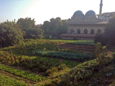 Gardens in Piyale Paşa, photo by Jennifer Hattam