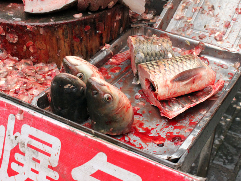 Shanghai 39 s best wet markets culinary backstreets for Chinese fish market near me